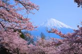 In Giappone con King Holidays per ammirare l'Hanami