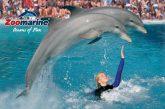 Zoomarine acquisisce il parco romagnolo Acquajoss e Marineland in Florida