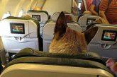 Ancora una gaffe per United: imbarca cane su aereo sbagliato