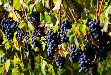 Unione di forze per il food&wine etneo