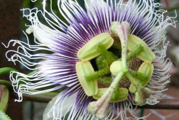 Rete Orti Botanici Lombardia promuove le biodiversità con 'SEMIami piantami'