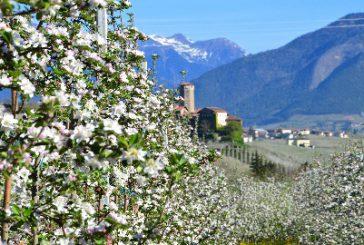 Con 'Aprile Dolce Fiorire' la Val di Non festeggia la fioritura dei suoi meli