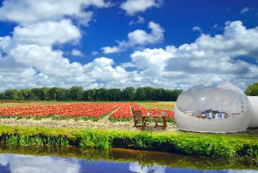 Con Booking.com si può trascorrere una notte in un campo di tulipani olandesi