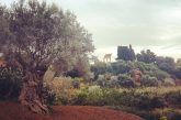 Via all'accordo tra Agrigento e il Fai-Giardino della Kolymbetra