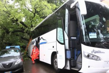 Firenze, ramo di tiglio si abbatte su pullman di turisti coreani: 14 i feriti