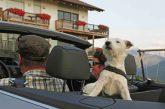 Vacanza con 'Fido' nei masi di Gallo Rosso