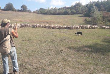Con Calyx alla scoperta del lavoro dei pastori e dei loro cani