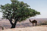 Nuovo itinerario in Oman targato Originaltour