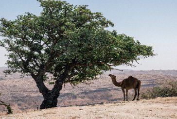Top Viaggi si spinge in Oman per i Ponti di Primavera