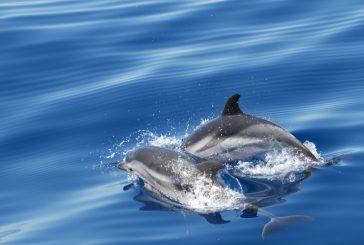 Osservare il passaggio dei cetacei alla Maddalena con WWF Travel
