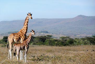 Il Kenya cerca alleati: Ryanair e easyJet portateci turisti