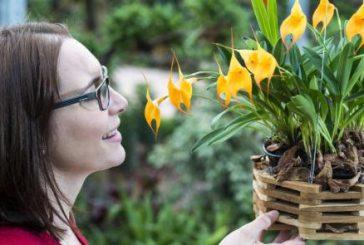 Con Orchideenwelt i tropici si spostano in Alto Adige