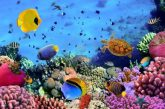 Cresce il numero dei turisti italiani in Egitto: al top il Mar Rosso