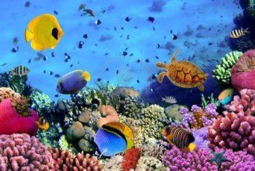 Turisanda presenta catalogo 'Mari & Oceani Speciale Estate': Cipro tra le novità