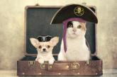 Piratinviaggio: ecco i suggerimenti per le vacanze con gli amici a 4 zampe