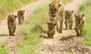 I 5 scatti fondamentali da non perdere in Namibia conViaggigiovani.it
