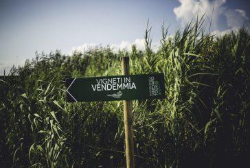 Torna il Mandrarossa Vineyard Tour 2018: tra mare e vigne alla scoperta del Menfishire