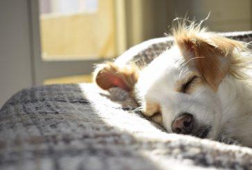 Sì ai cani nelle cabine delle navi, lettera della Lav a Siremar e Caronte&Tourist