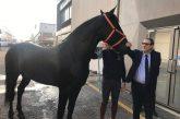La Sicilia punta sull'equiturismo: sull'Isola il più grande evento equestre del Sud Italia