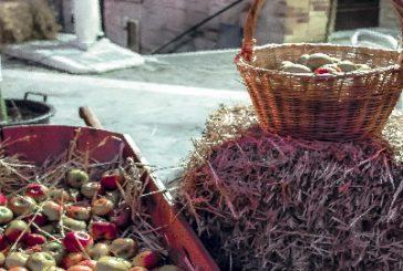 Cooking show, menù dedicati a Montedinove per celebrare la Mela dei Sibillini