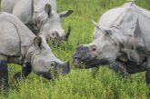 Nei parchi naturali dell'India tra rinoceronti, tigri e macachi con WWF Travel