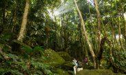 Itinerario naturalistico alle Seychelles con WWF Travel