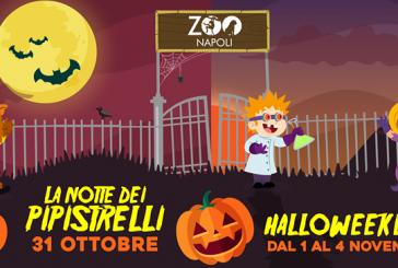 É tutto pronto per un Halloween da paura allo Zoo di Napoli