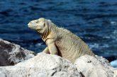In viaggio sulle orme di Darwin con WWF Travel e Biosfera Itinerari