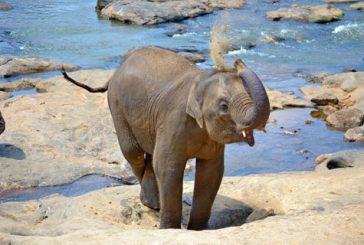 Esperienza a contato con la natura in Sri Lanka con KiboTours