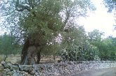 Unesco promuove i 'muretti a secco' Patrimonio dell'umanità