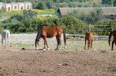 Ippoturismo, Musumeci: in Sicilia a maggio la Fiera mediterranea del cavallo