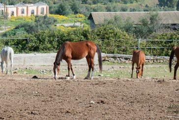 Ambelia si rifà il look per ospitare la Fiera mediterranea del cavallo