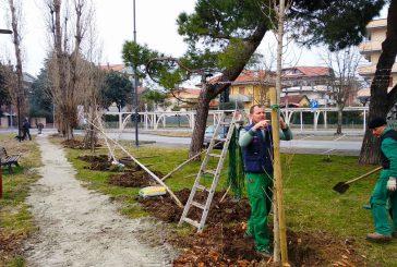 Nuovi alberi a Bellaria Igea Marina grazie al progetto 'Green Booking'