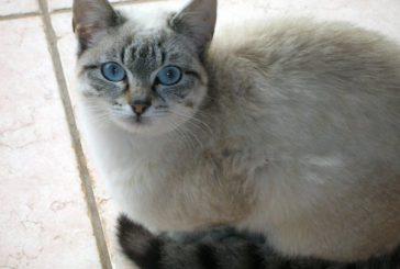 Amanti dei gatti riuniti a Genova per la 'WorldCats' 2019