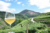 In Trentino si celebra la birra artigianale lungo la Strada del Vino e dei Sapori