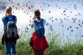 Al via campagna 'Vacanze Natura e Cultura' per promuovere Delta del Po