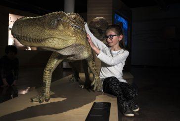 Dormire tra i dinosauri  al Museo geologico delle Dolomiti di Predazzo