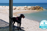 Il Pineto Beach Village & Camping al top tra i Campeggi e Villaggi Pet Friendly in Italia