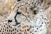 Glamour TO propone pacchetti per scoprire l'Africa da maggio a ottobre