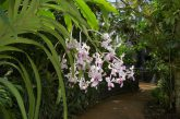 'Orchids @ Muse', le più belle orchidee del mondo in mostra al Muse