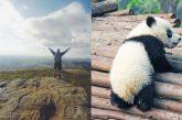 Agenti di Viaggio: da pionieri a 'panda' del sistema turistico