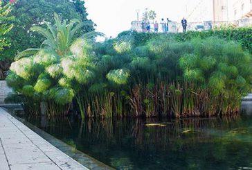 Siracusa, Civita apre a pubblico la Fonte Aretusa con un percorso ad hoc