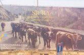 Vacche smagrite per promuovere la Sicilia? polemica per la campagna di Virtu Ferries