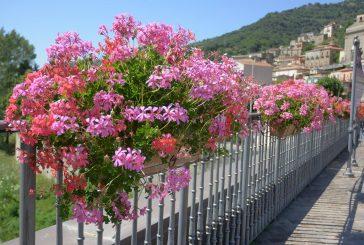 Comuni Fioriti, il 4 settembre incontro con l'assessore Messina