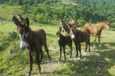 La silenziosa morte del Parco dei Monti Sicani sembra non interessare nessuno