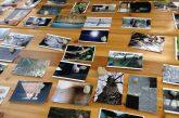 Due weekend d'arte a Levice nella casa colonica Pianpicollo Selvatico