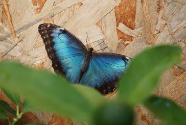Alla Casa delle Farfalle di Palermo biglietto ridotto domenica 3 novembre